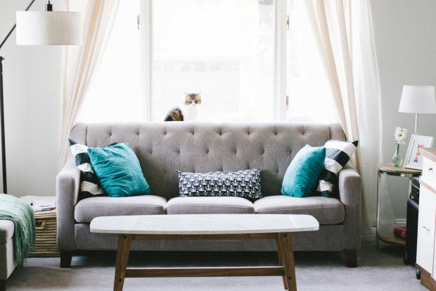 Salones perfectos para fotografía de interiores: Interior de salón con sofá, gato y ventana